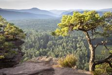 Blick ins Dahner Felsenland | © juhumbert/Fotolia.com